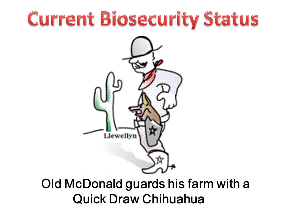 Old McDonald guards his farm with a Quick Draw Chihuahua