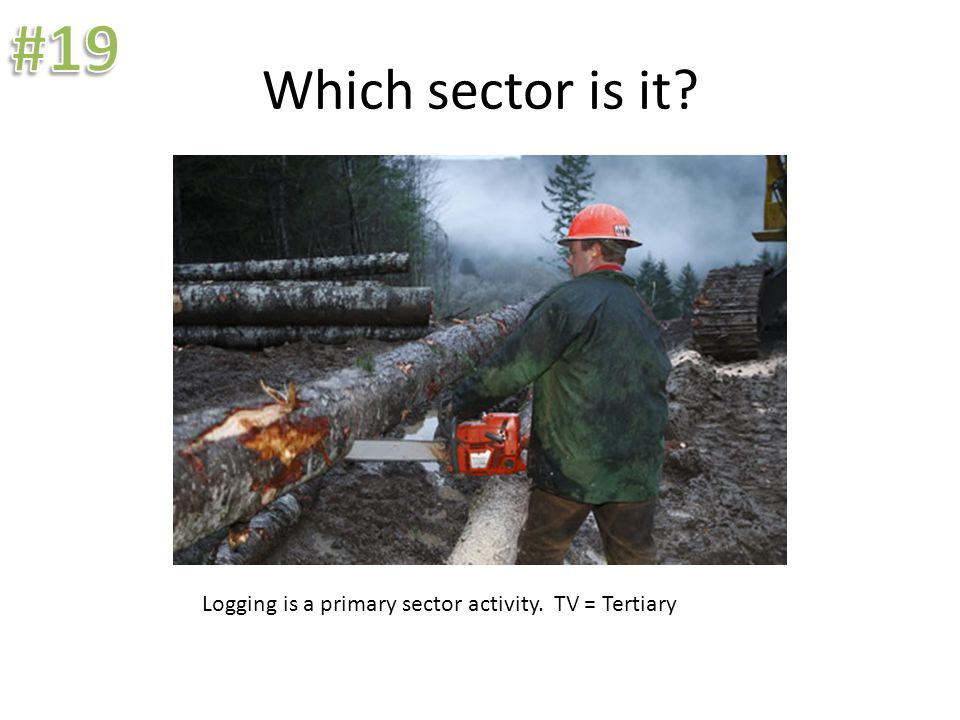Which sector is it? Logging is a primary sector activity. TV = Tertiary