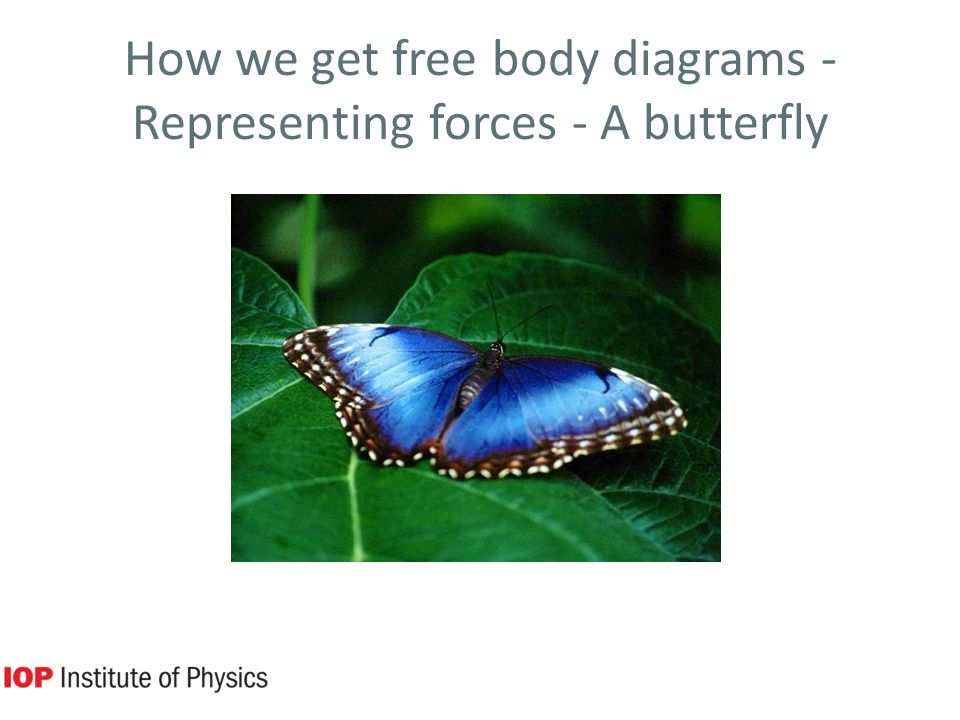How we get free body diagrams - Representing forces - A butterfly