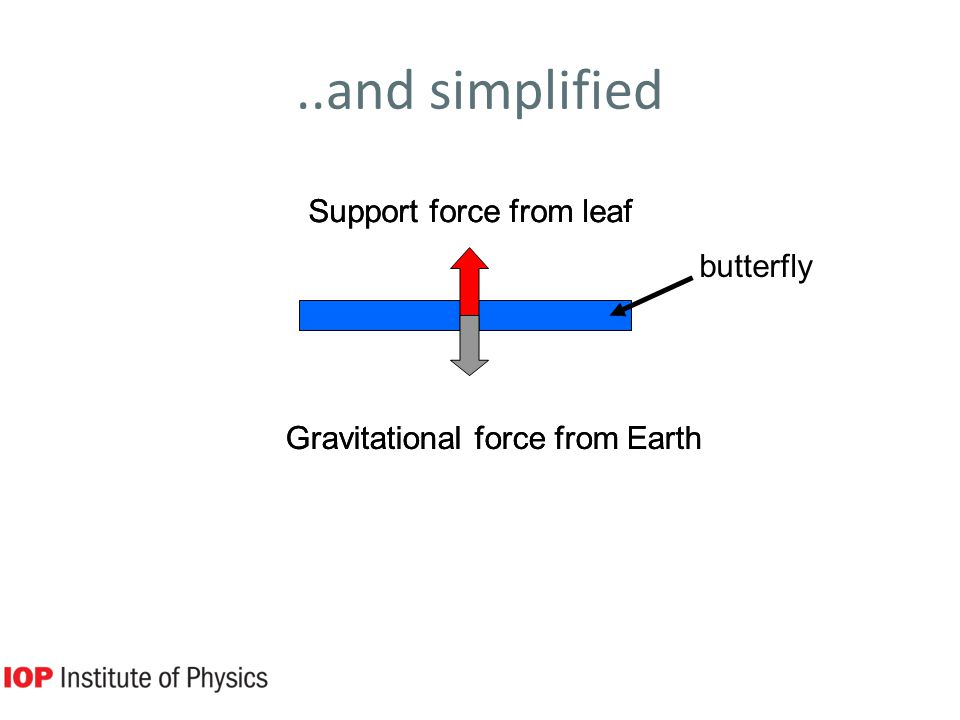 ..and simplified butterfly Support force from leaf Gravitational force from Earth Support force from leaf Gravitational force from Earth