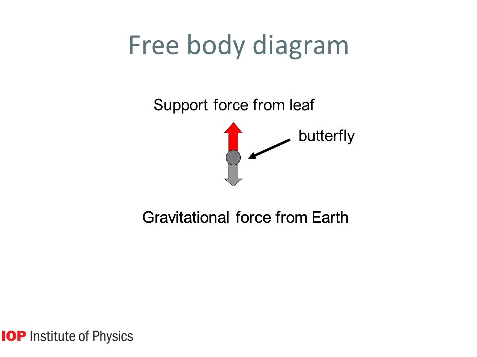 Free body diagram butterfly Support force from leaf Gravitational force from Earth