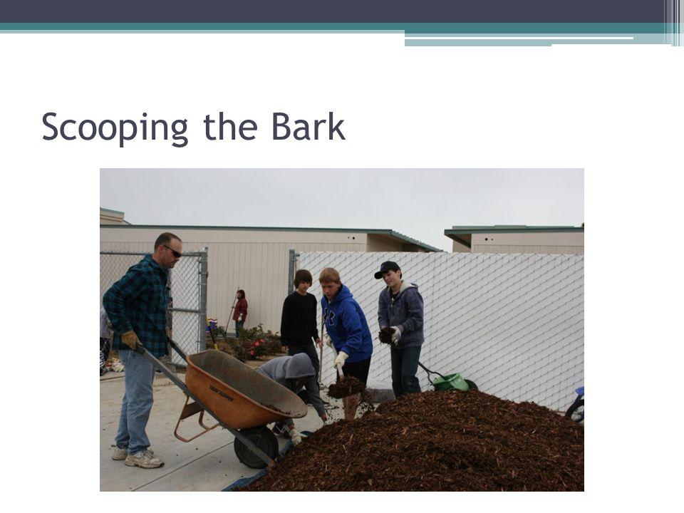 Scooping the Bark