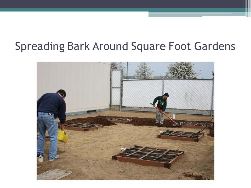 Spreading Bark Around Square Foot Gardens