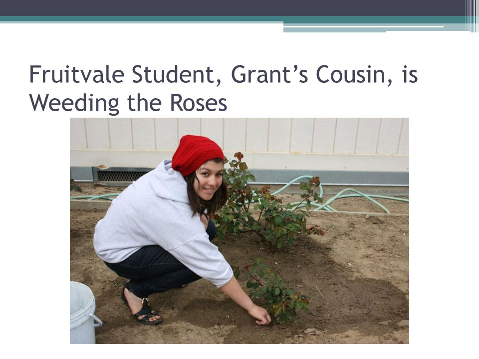 Fruitvale Student, Grant's Cousin, is Weeding the Roses