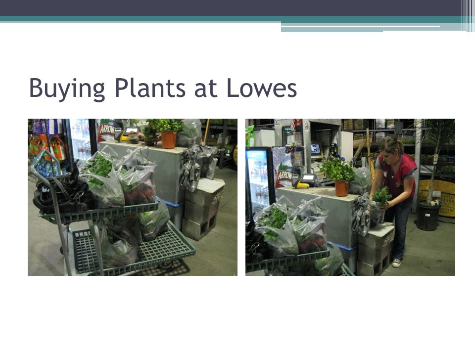 Buying Plants at Lowes