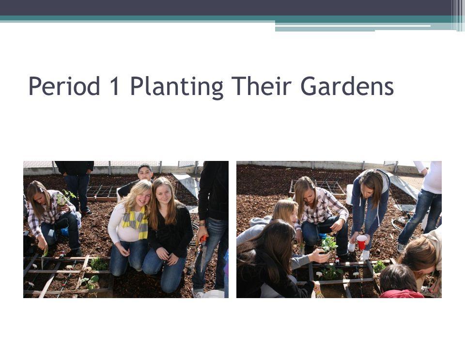 Period 1 Planting Their Gardens