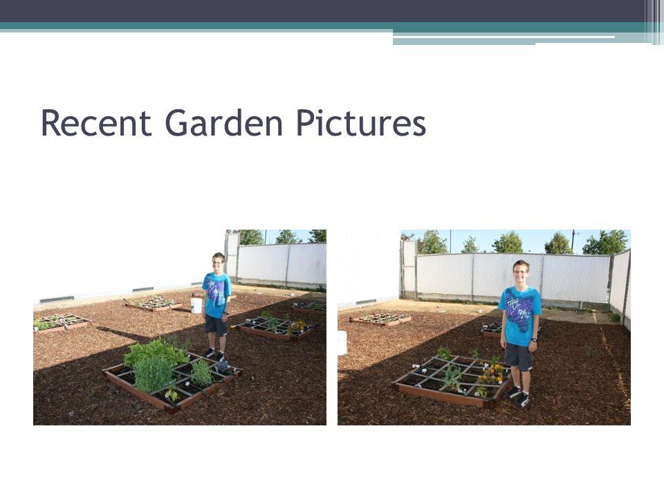 Recent Garden Pictures
