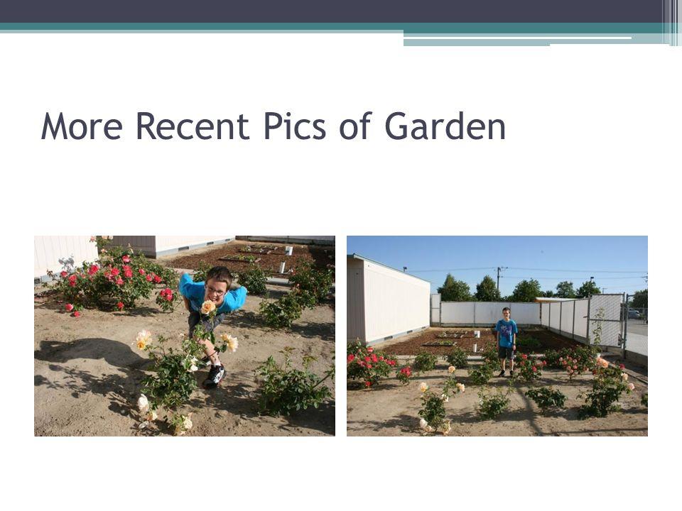 More Recent Pics of Garden