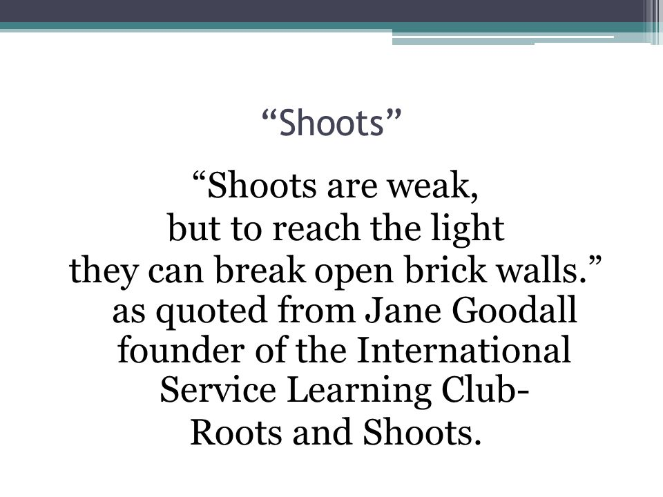 Shoots Shoots are weak, but to reach the light they can break open brick walls. as quoted from Jane Goodall founder of the International Service Learning Club- Roots and Shoots.
