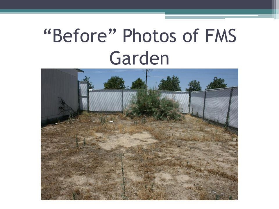 Before Photos of FMS Garden