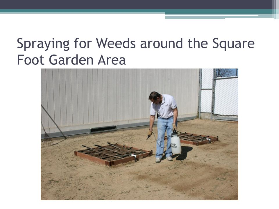 Spraying for Weeds around the Square Foot Garden Area