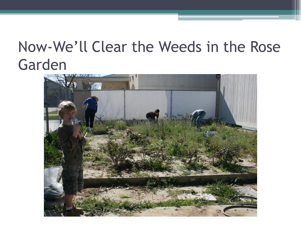 Now-We'll Clear the Weeds in the Rose Garden