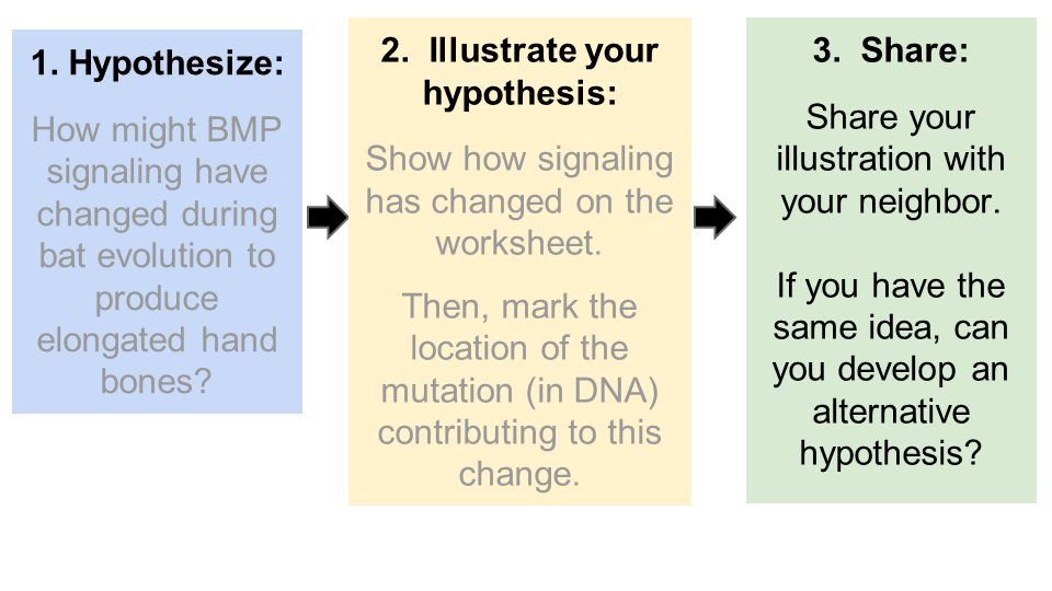1. Hypothesize: How might BMP signaling have changed during bat evolution to produce elongated hand bones? 3. Share: Share your illustration with your