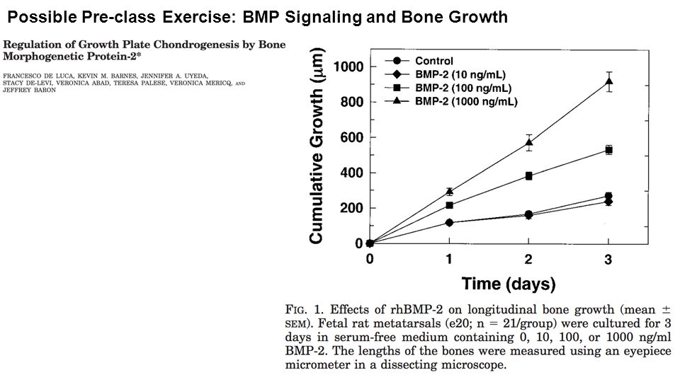 Possible Pre-class Exercise: BMP Signaling and Bone Growth