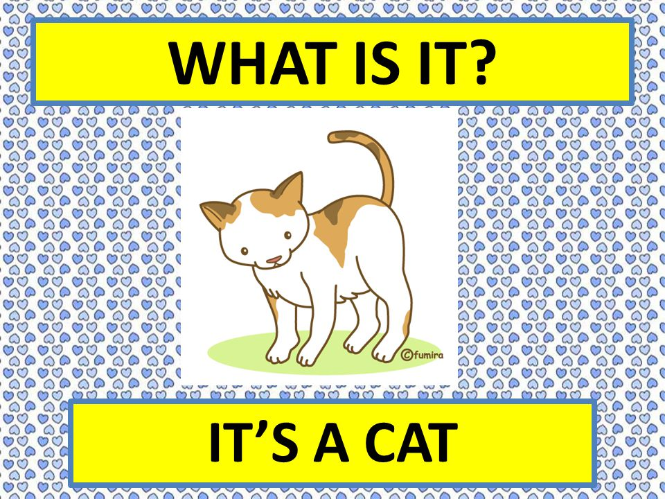 WHAT IS IT? IT'S A CAT