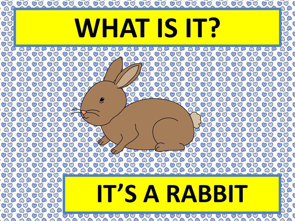 WHAT IS IT? IT'S A RABBIT