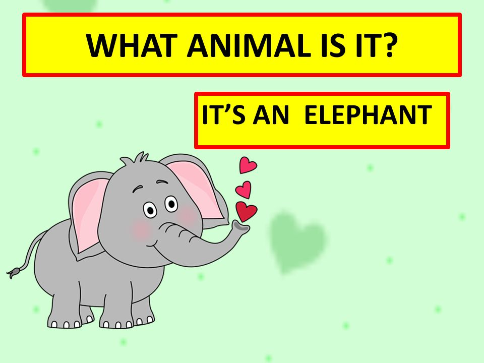 WHAT ANIMAL IS IT IT'S AN ELEPHANT