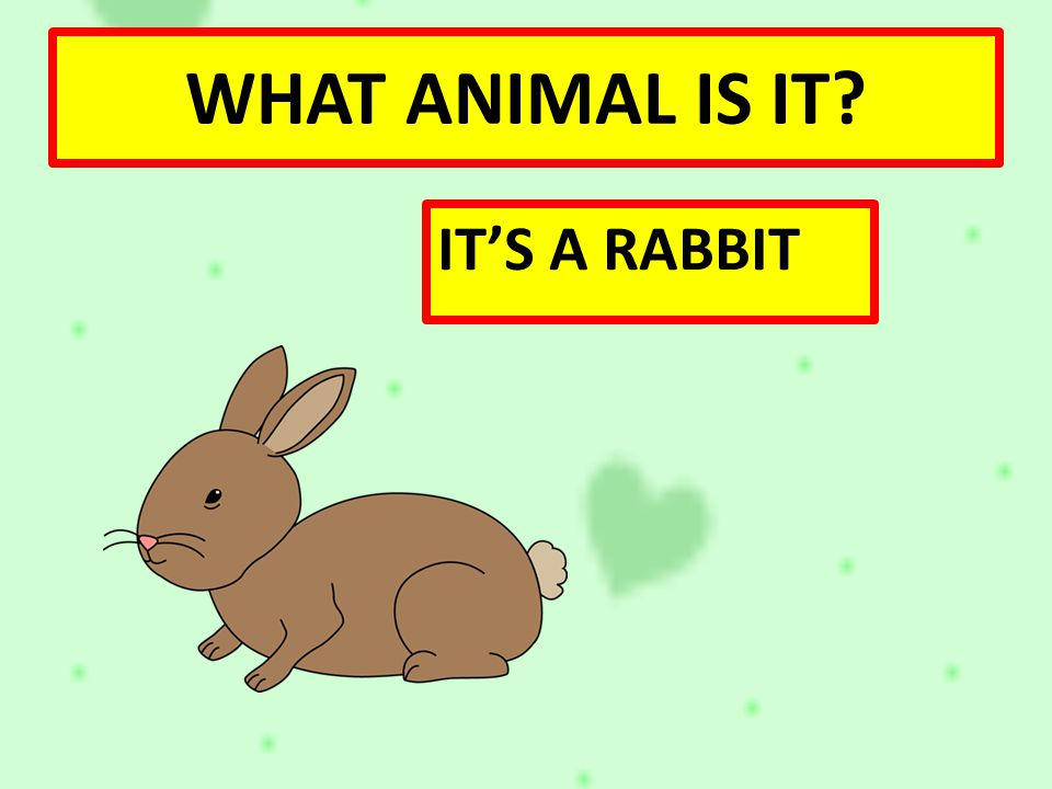 WHAT ANIMAL IS IT IT'S A RABBIT