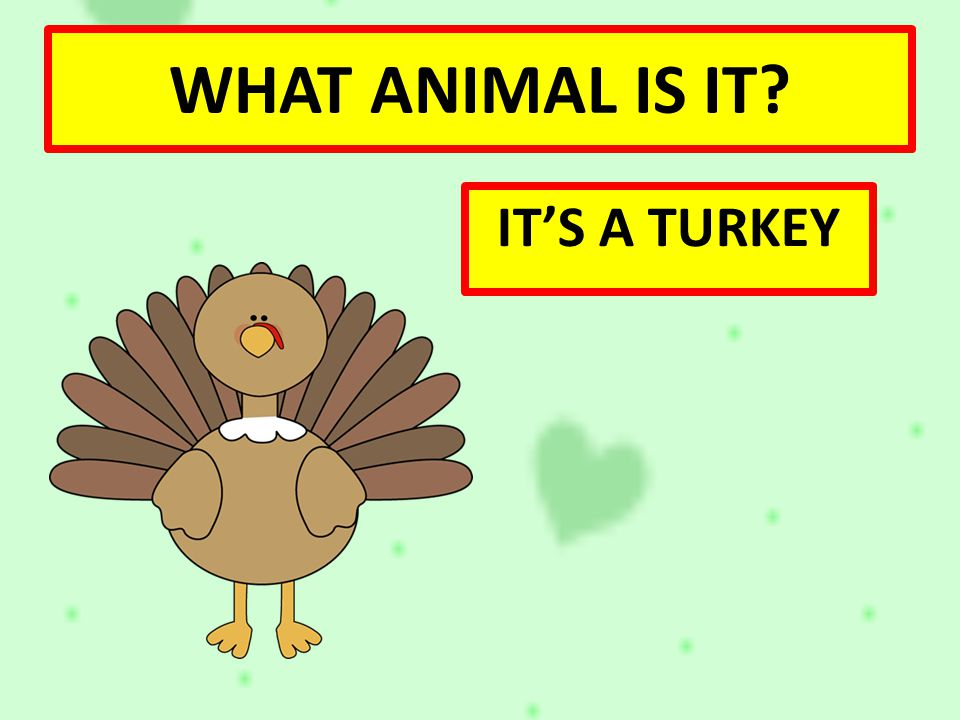 WHAT ANIMAL IS IT IT'S A TURKEY