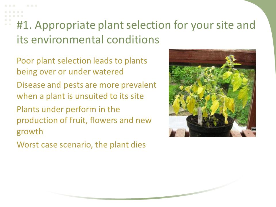 #1. Appropriate plant selection for your site and its environmental conditions Poor plant selection leads to plants being over or under watered Diseas