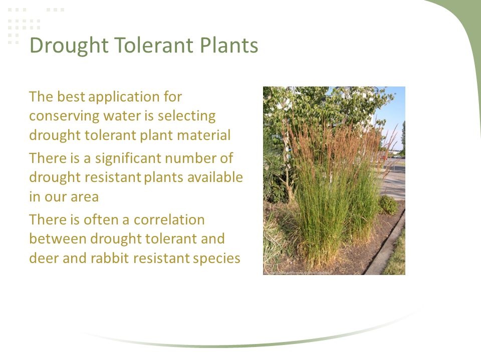 Drought Tolerant Plants The best application for conserving water is selecting drought tolerant plant material There is a significant number of drought resistant plants available in our area There is often a correlation between drought tolerant and deer and rabbit resistant species
