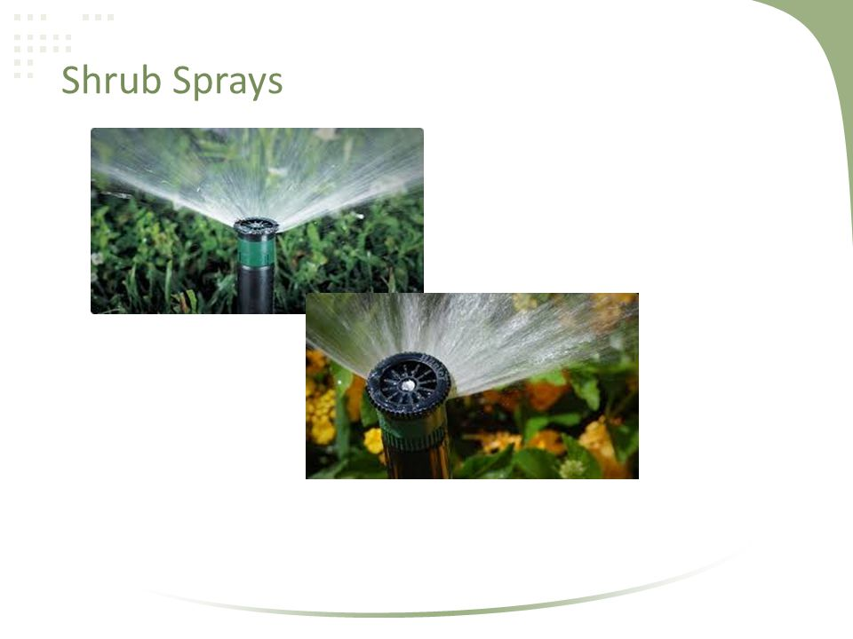 Shrub Sprays