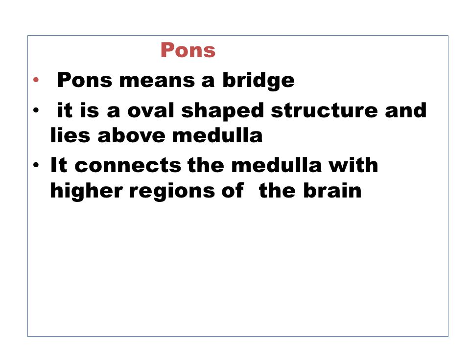 Pons Pons means a bridge it is a oval shaped structure and lies above medulla It connects the medulla with higher regions of the brain