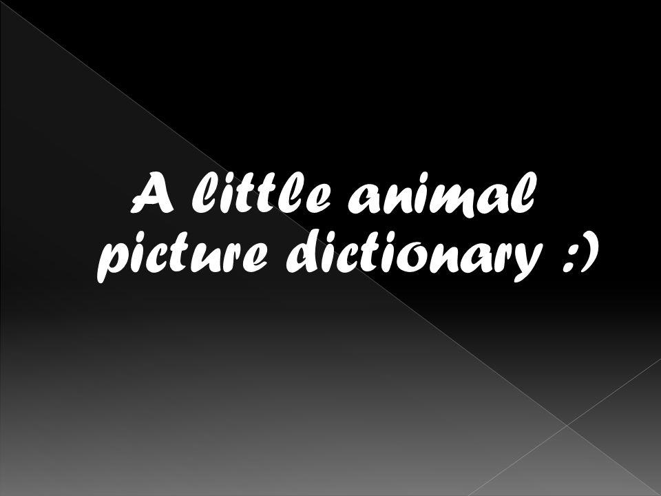 It is an otter.