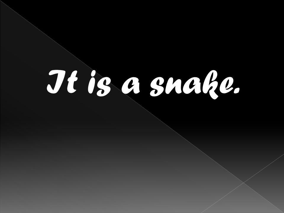 It is a snake.