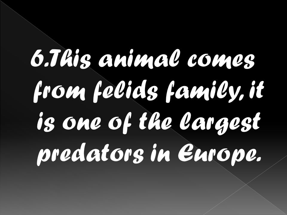 6.This animal comes from felids family, it is one of the largest predators in Europe.
