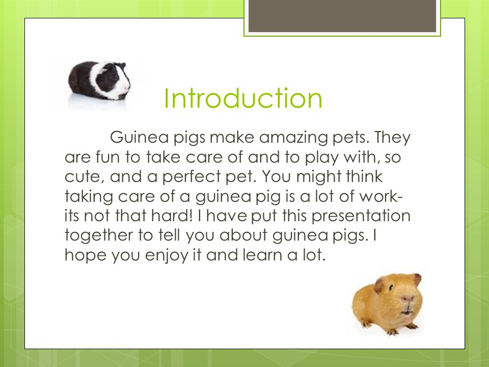 Introduction Guinea pigs make amazing pets.