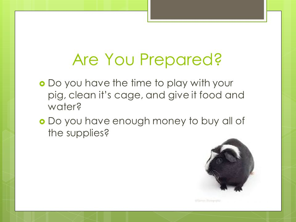 Are You Prepared?  Do you have the time to play with your pig, clean it's cage, and give it food and water?  Do you have enough money to buy all of