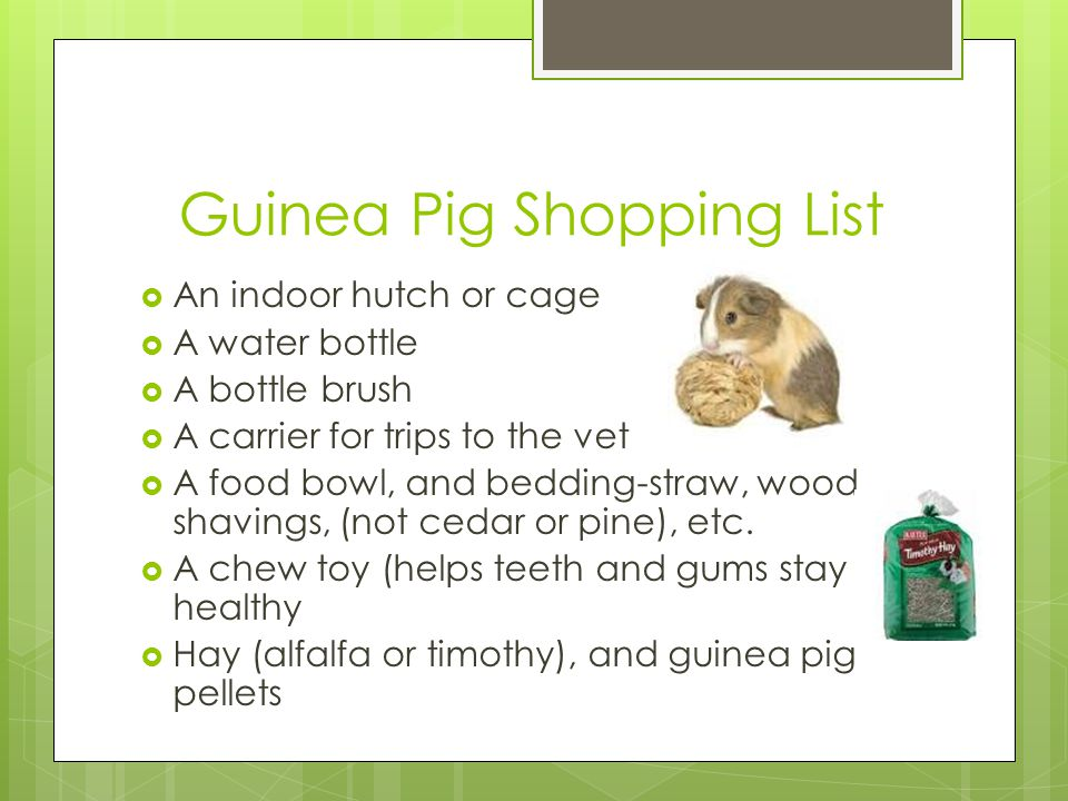 Guinea Pig Shopping List  An indoor hutch or cage  A water bottle  A bottle brush  A carrier for trips to the vet  A food bowl, and bedding-straw, wood shavings, (not cedar or pine), etc.
