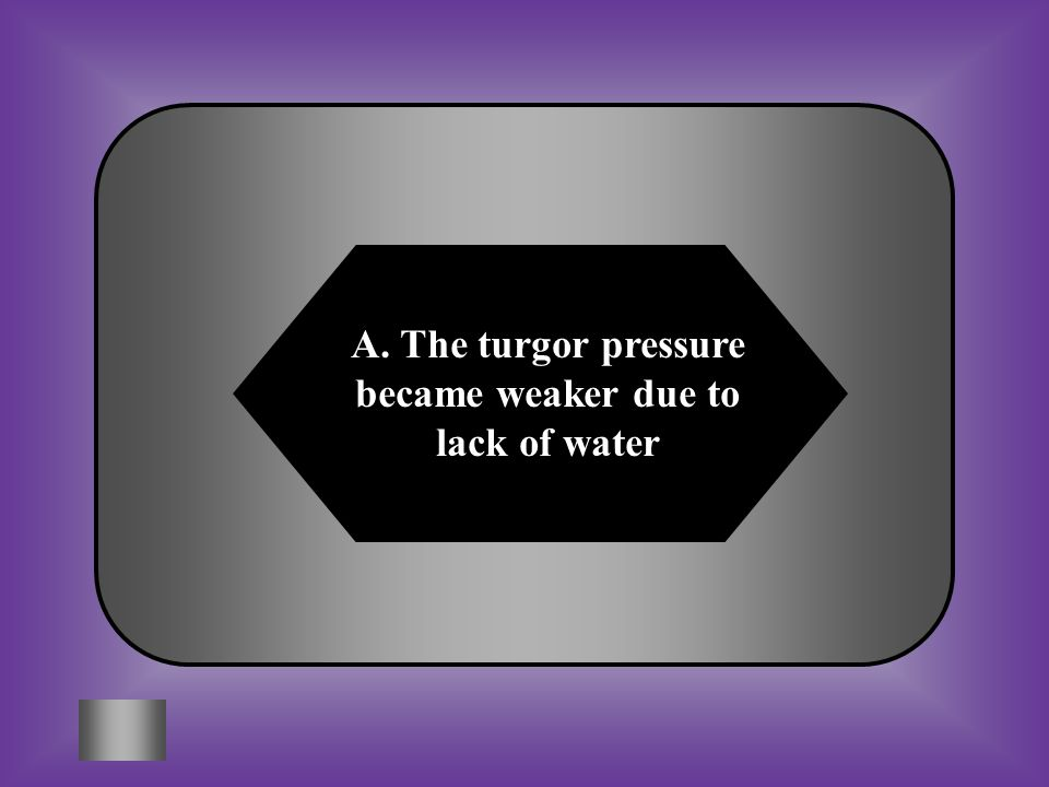A:B: The turgor pressure became weaker due to the lack of water The sun's energy decreased the turgor pressure in the plant #8 What has happened when