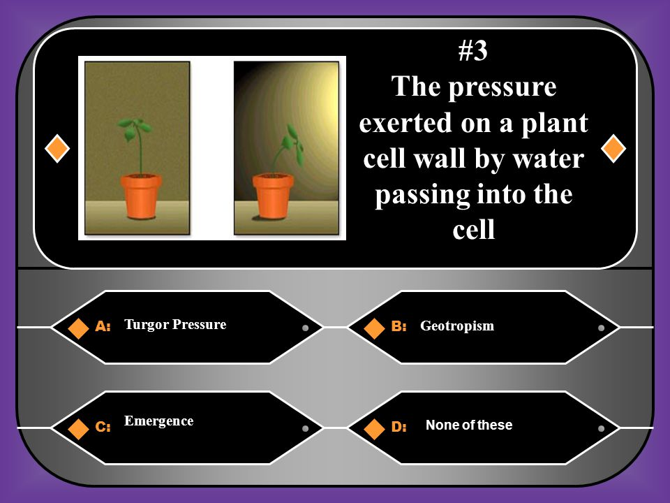 A:B: Turgor Pressure Geotropism C:D: Emergence None of these #3 The pressure exerted on a plant cell wall by water passing into the cell
