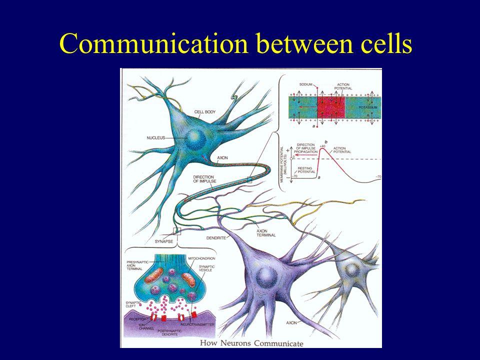 Communication between cells