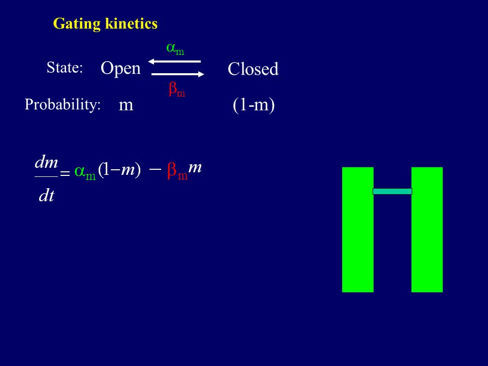 Open Closed mm mm m Probability: State: (1-m) mm mm Gating kinetics