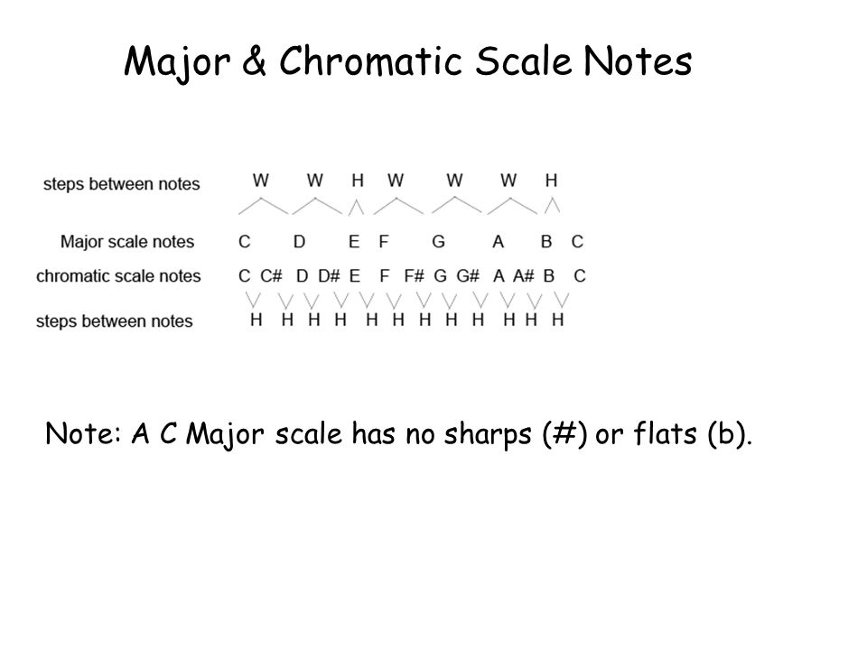 Major & Chromatic Scale Notes Note: A C Major scale has no sharps (#) or flats (b).