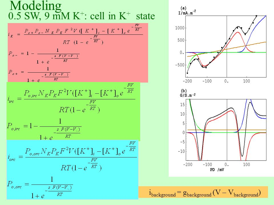 Modeling 0.5 SW, 9 mM K + : cell in K + state i background = g background (V – V background )