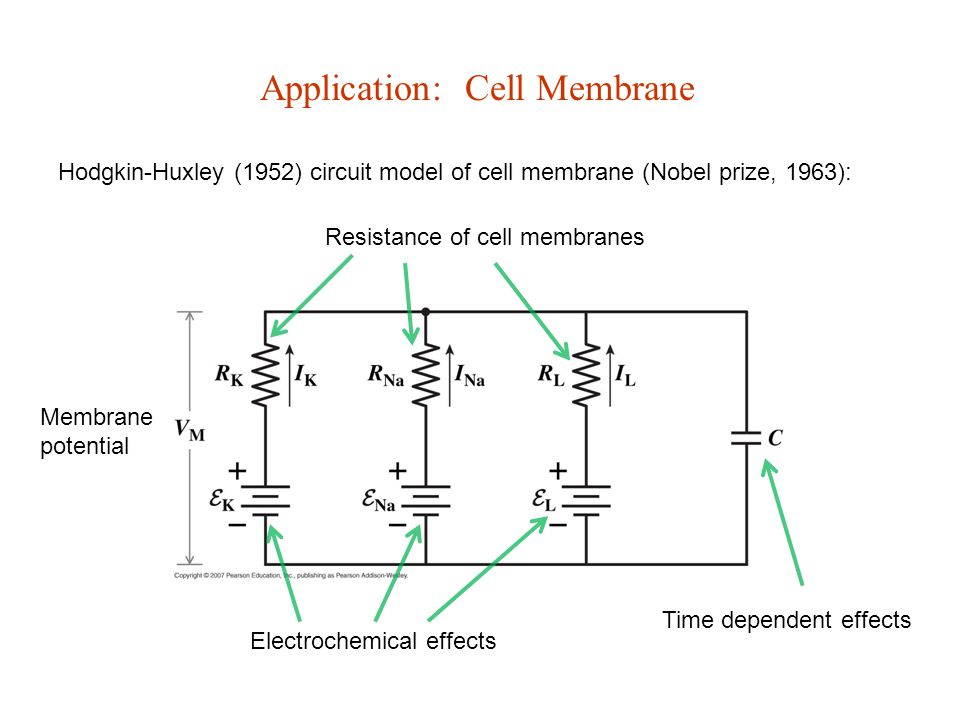 Application: Cell Membrane Hodgkin-Huxley (1952) circuit model of cell membrane (Nobel prize, 1963): Electrochemical effects Resistance of cell membranes Membrane potential Time dependent effects