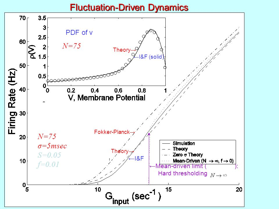 PDF of v Theory→ ←I&F (solid) Fokker-Planck→ Theory→ ←I&F ←Mean-driven limit ( ): Hard thresholding Fluctuation-Driven Dynamics N=75 σ=5msec S=0.05 f=0.01 Experiment firing rate (Hz)