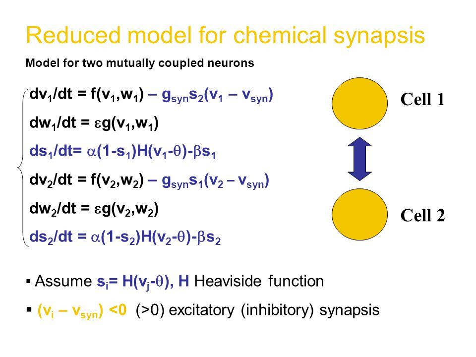 Reduced model for chemical synapsis Model for two mutually coupled neurons  Assume s i = H(v j -  ), H Heaviside function  (v i – v syn ) 0) excitatory (inhibitory) synapsis dv 1 /dt = f(v 1,w 1 ) – g syn s 2 (v 1 – v syn ) dw 1 /dt =  g(v 1,w 1 ) ds 1 /dt=  (1-s 1 )H(v 1 -  )-  s 1 dv 2 /dt = f(v 2,w 2 ) – g syn s 1 (v 2 – v syn ) dw 2 /dt =  g(v 2,w 2 ) ds 2 /dt =  (1-s 2 )H(v 2 -  )-  s 2 Cell 1 Cell 2