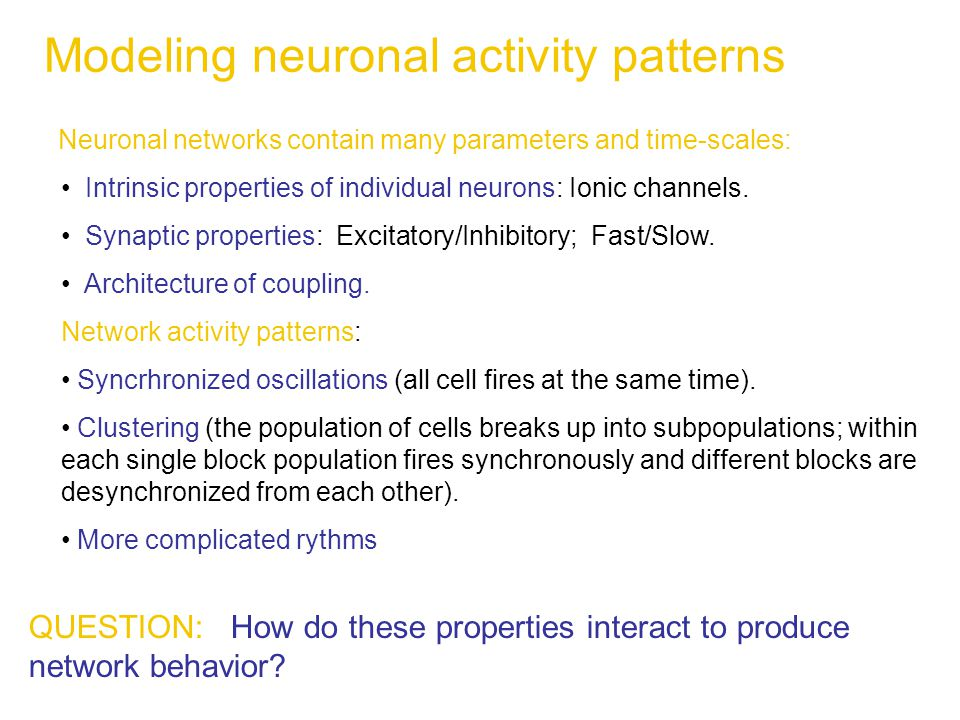 Modeling neuronal activity patterns Neuronal networks contain many parameters and time-scales: Intrinsic properties of individual neurons: Ionic channels.