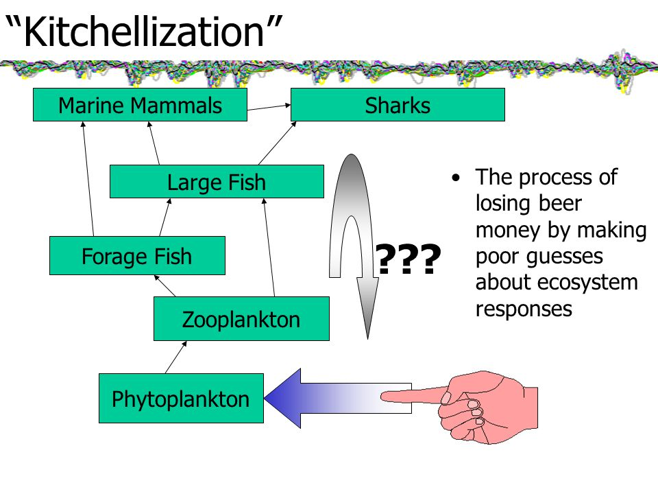Kitchellization The process of losing beer money by making poor guesses about ecosystem responses Phytoplankton Zooplankton Forage Fish Large Fish Marine MammalsSharks
