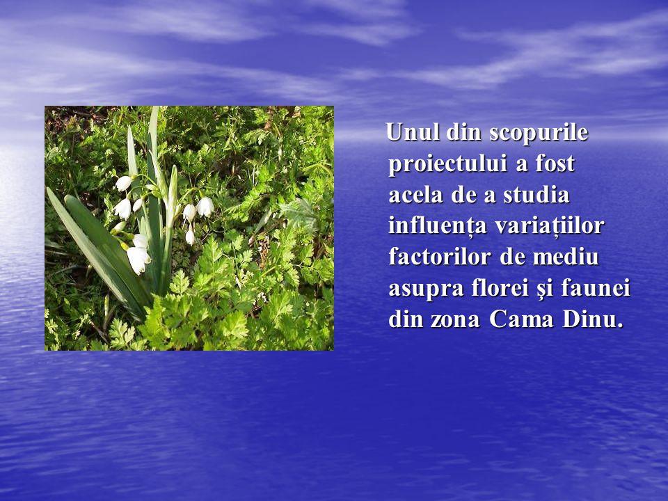 Unul din scopurile proiectului a fost acela de a studia influenţa variaţiilor factorilor de mediu asupra florei şi faunei din zona Cama Dinu. Unul din