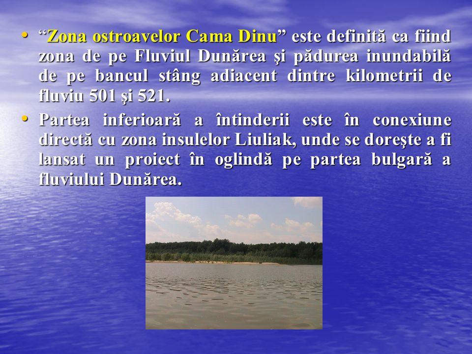 """""""Zona ostroavelor Cama Dinu"""" este definită ca fiind zona de pe Fluviul Dunărea şi pădurea inundabilă de pe bancul stâng adiacent dintre kilometrii de"""