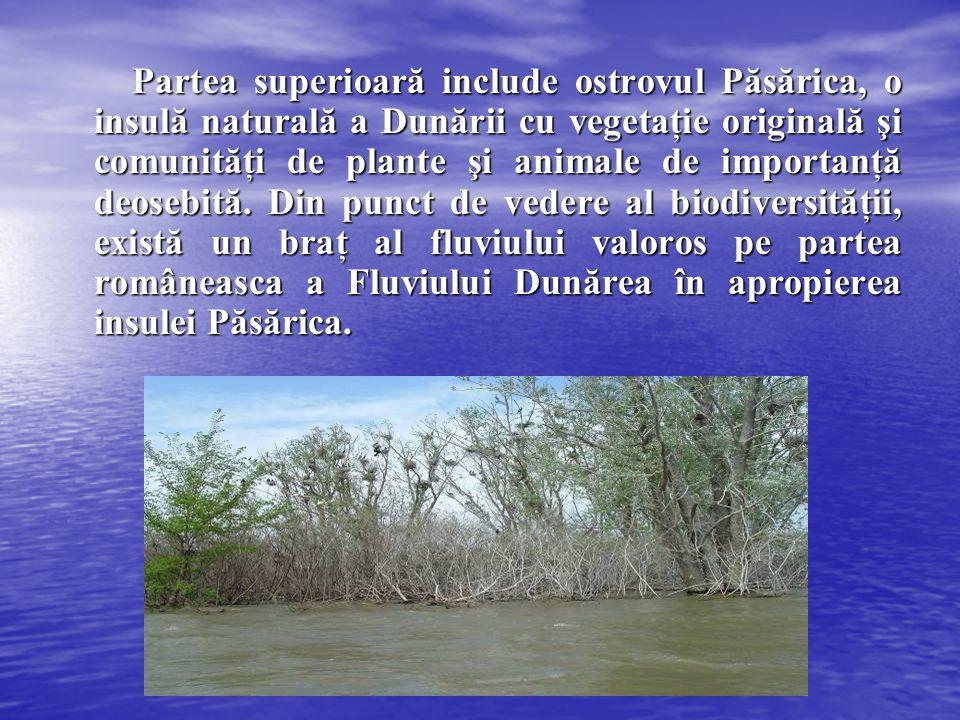 Partea superioară include ostrovul Păsărica, o insulă naturală a Dunării cu vegetaţie originală şi comunităţi de plante şi animale de importanţă deose