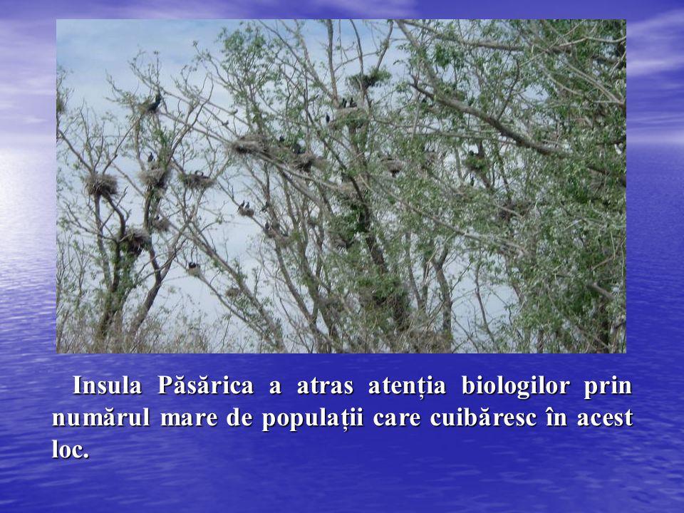 Insula Păsărica a atras atenţia biologilor prin numărul mare de populaţii care cuibăresc în acest loc. Insula Păsărica a atras atenţia biologilor prin