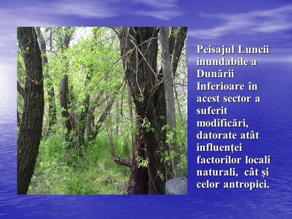 Peisajul Luncii inundabile a Dunării Inferioare în acest sector a suferit modificări, datorate atât influenţei factorilor locali naturali, cât şi celo