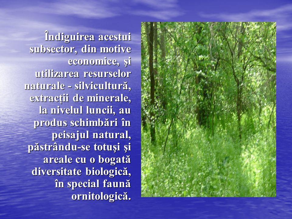 Îndiguirea acestui subsector, din motive economice, şi utilizarea resurselor naturale - silvicultură, extracţii de minerale, la nivelul luncii, au pro
